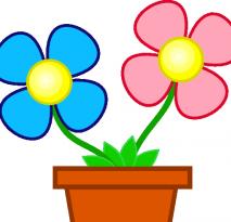 flowers-in-pot